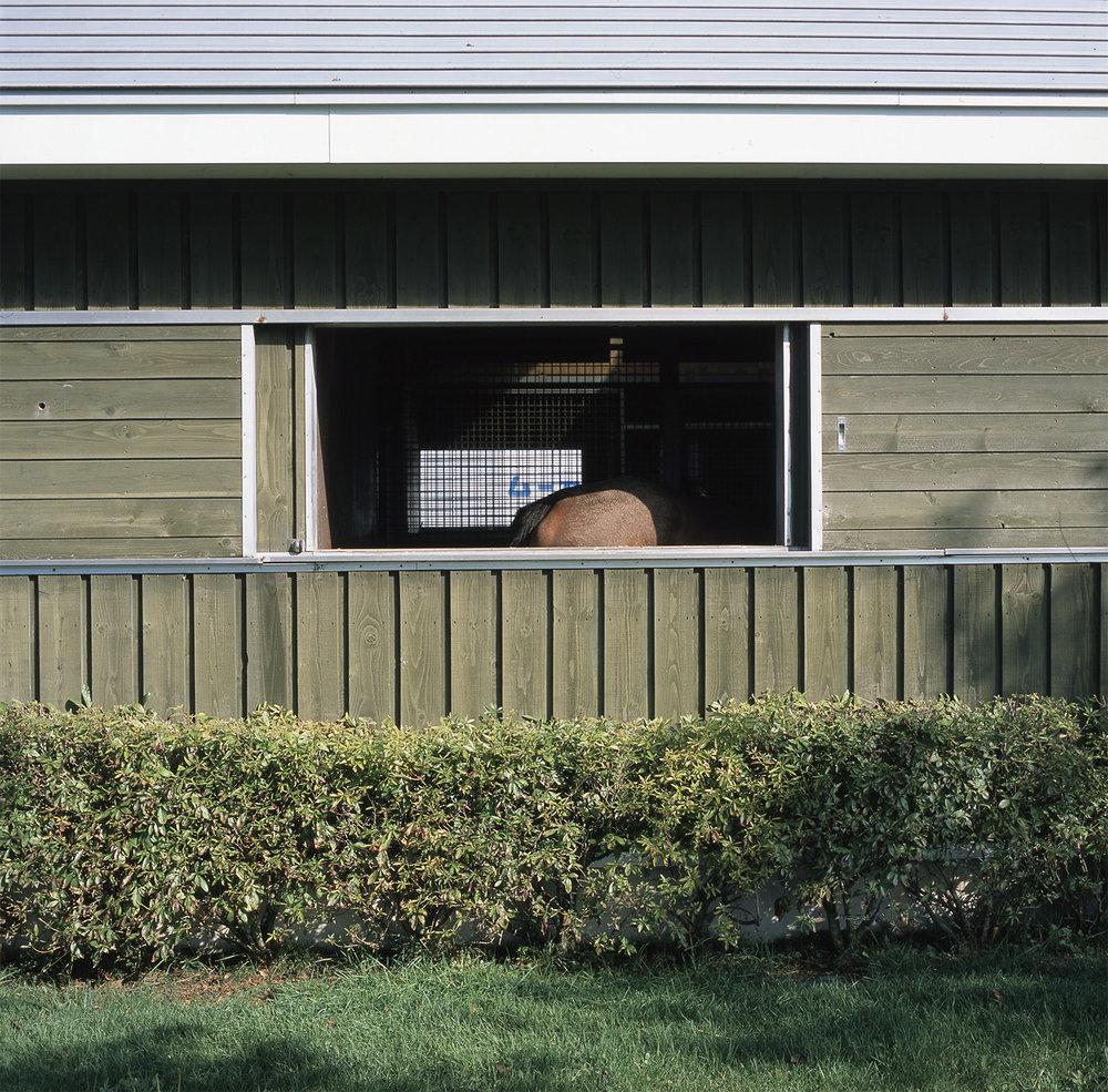 horseinshade.jpg