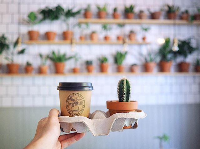 A classic never gets old ☕️🌵