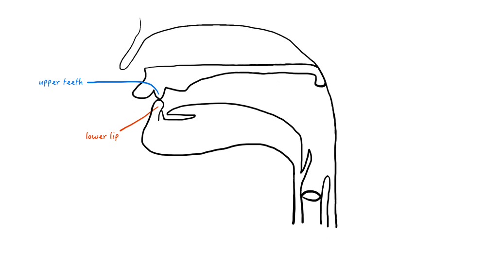 A cartoon representation of the labiodental place of articulation.