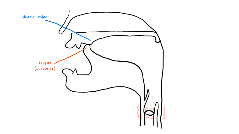 A cartoon representation of the retroflex place of articulation