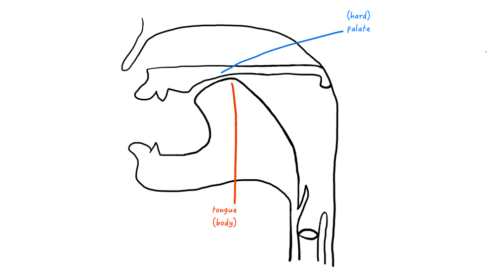 A cartoon representation of a palatal place of articulation.