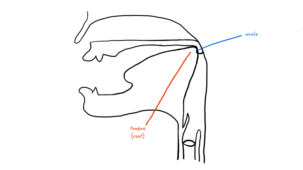 A cartoon representation of a uvular place of articulation.