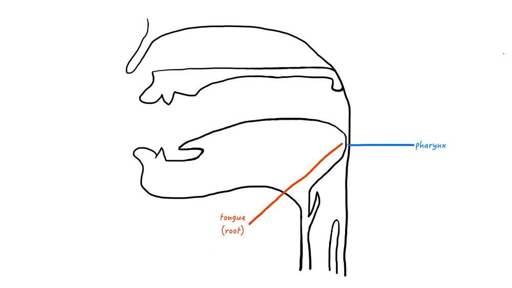 A cartoon representation of a pharyngeal place of articulation.