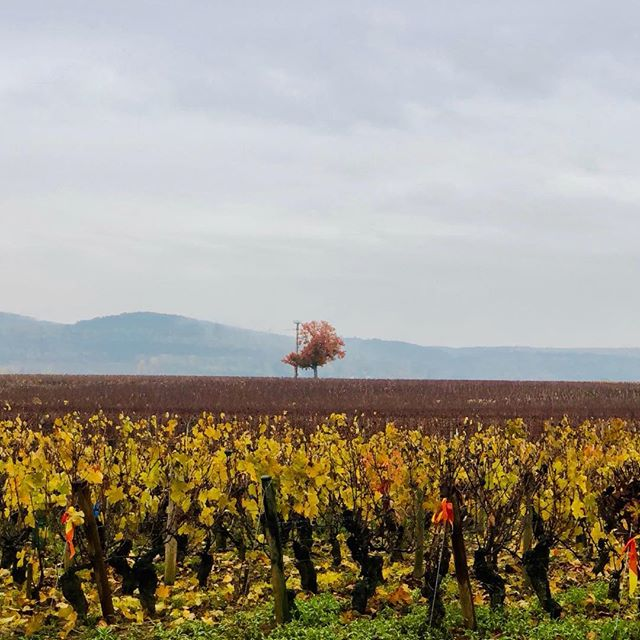 On the road - In the vines #burgundy #bourgogne #corton #winelover #ontheroad #colours #textures #inthevines