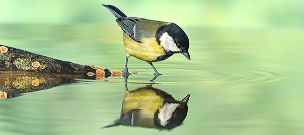 homeopath_nj_bird_reflection