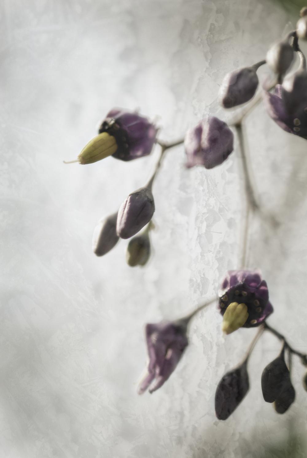 Wildflower_01B_0431.jpg