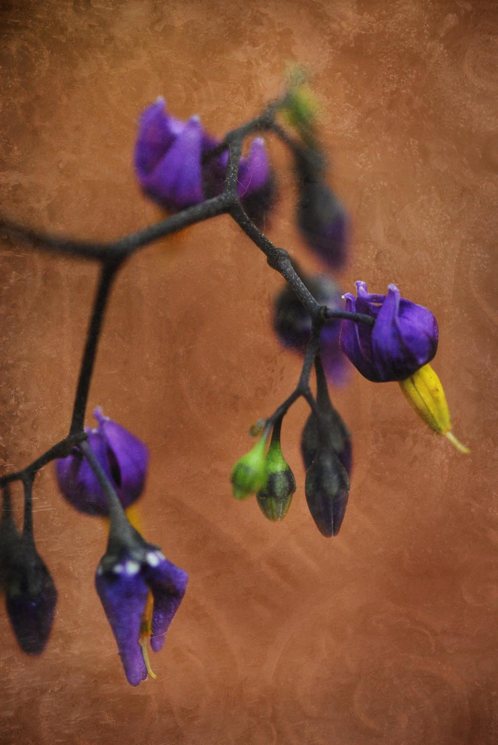 Wildflower_07_0439.jpg