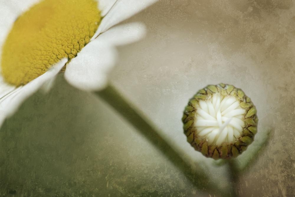 Wildflower_10_0262.jpg