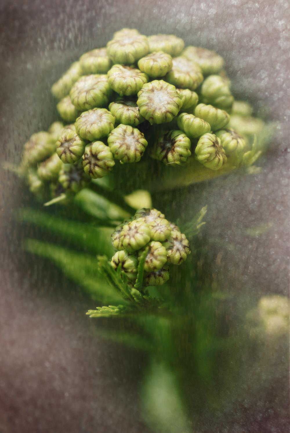 Wildflower_12_0325.jpg