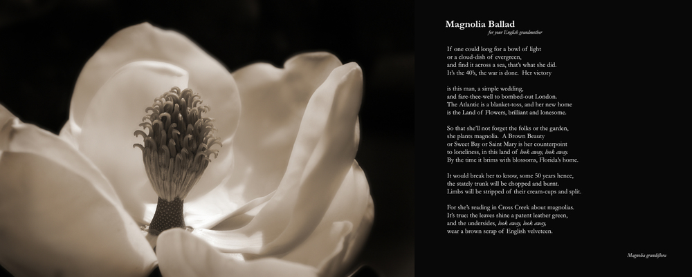 MagnoliaBallad.jpg