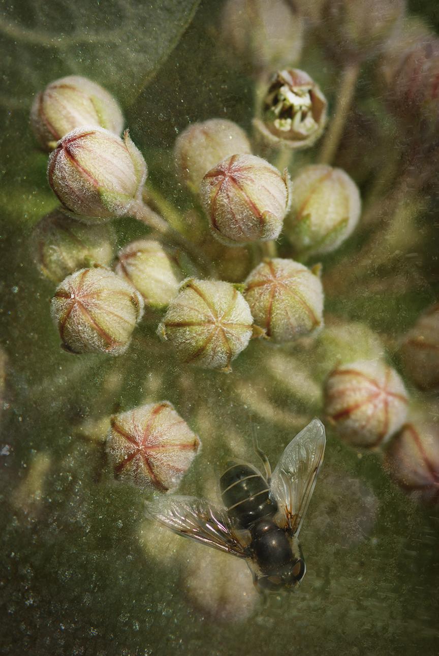 Wildflower_0310beeWEB.jpg