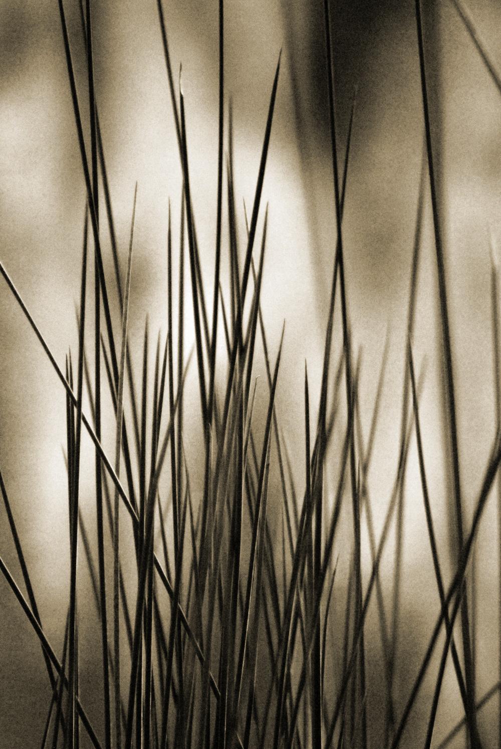 """""""Rising Reeds"""""""