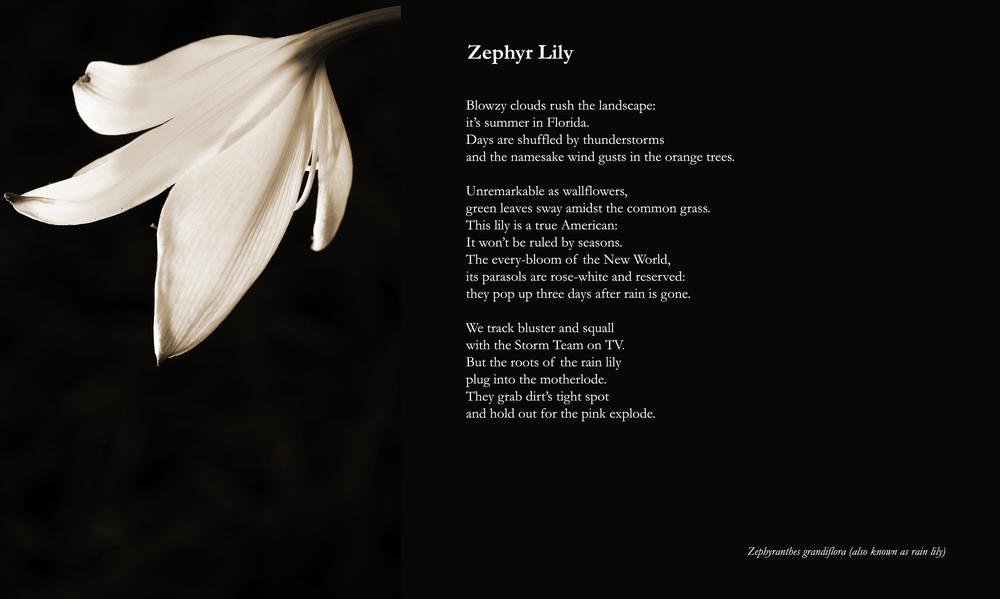 ZephyrLilly.jpg