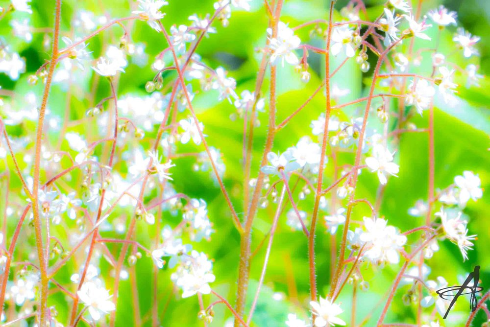 P1030102 watermark.jpg