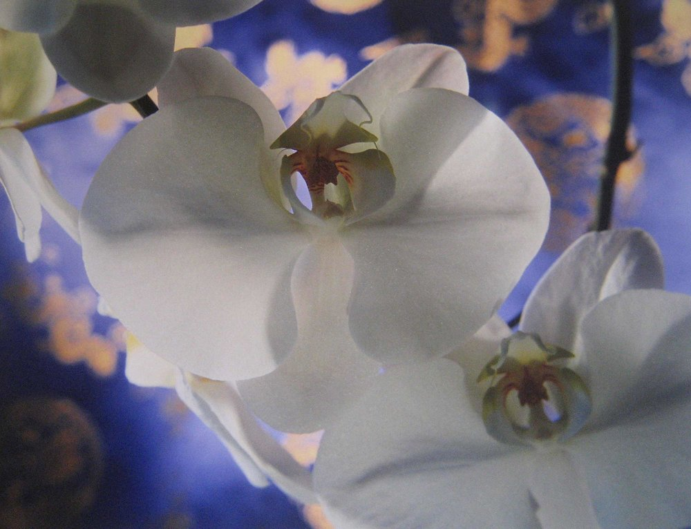 CROCKER_orchid_with_chinese_silk_11x16.jpg