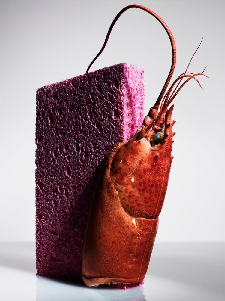sponge&lobstar_1.jpg