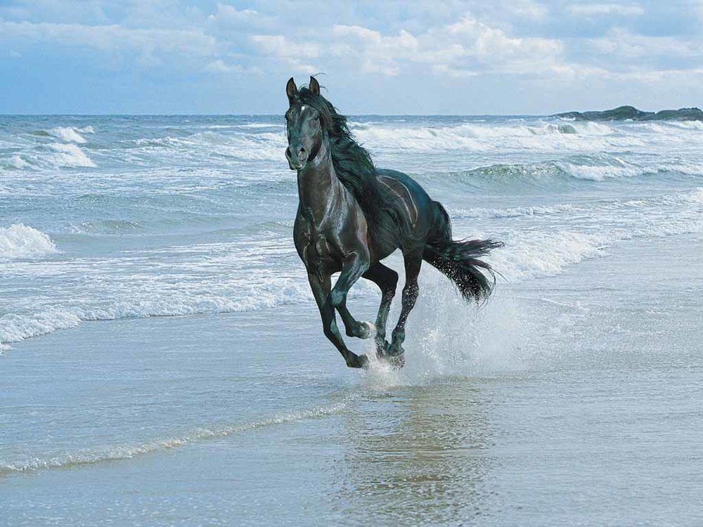 HorseBeachOriginal.jpg