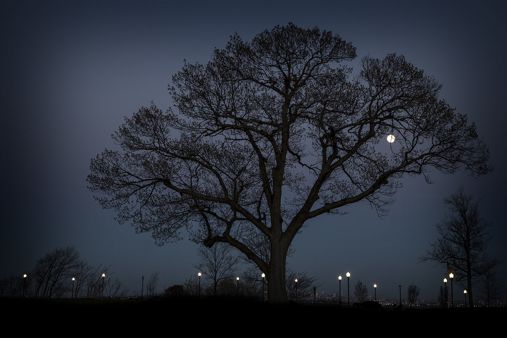 Tree + Moon 1, Eagle Rock Reservation , New Jersey