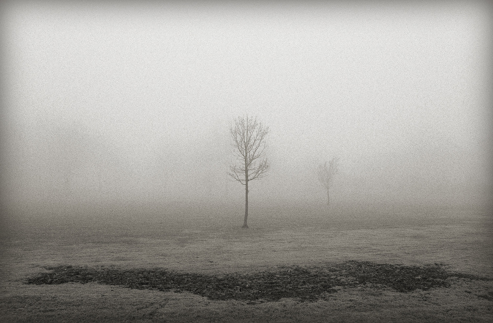 Tree + Fog, ERR, New Jersey