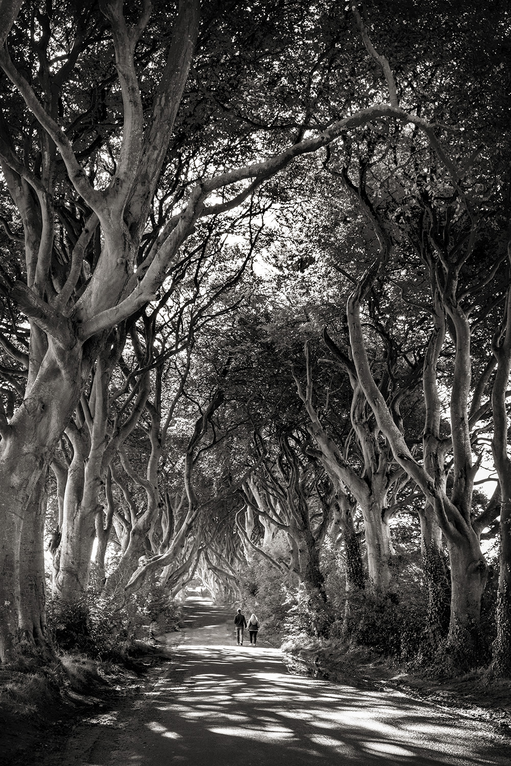 igg••Dark Hedges 1 ••BW 1c_DSF5195.jpg