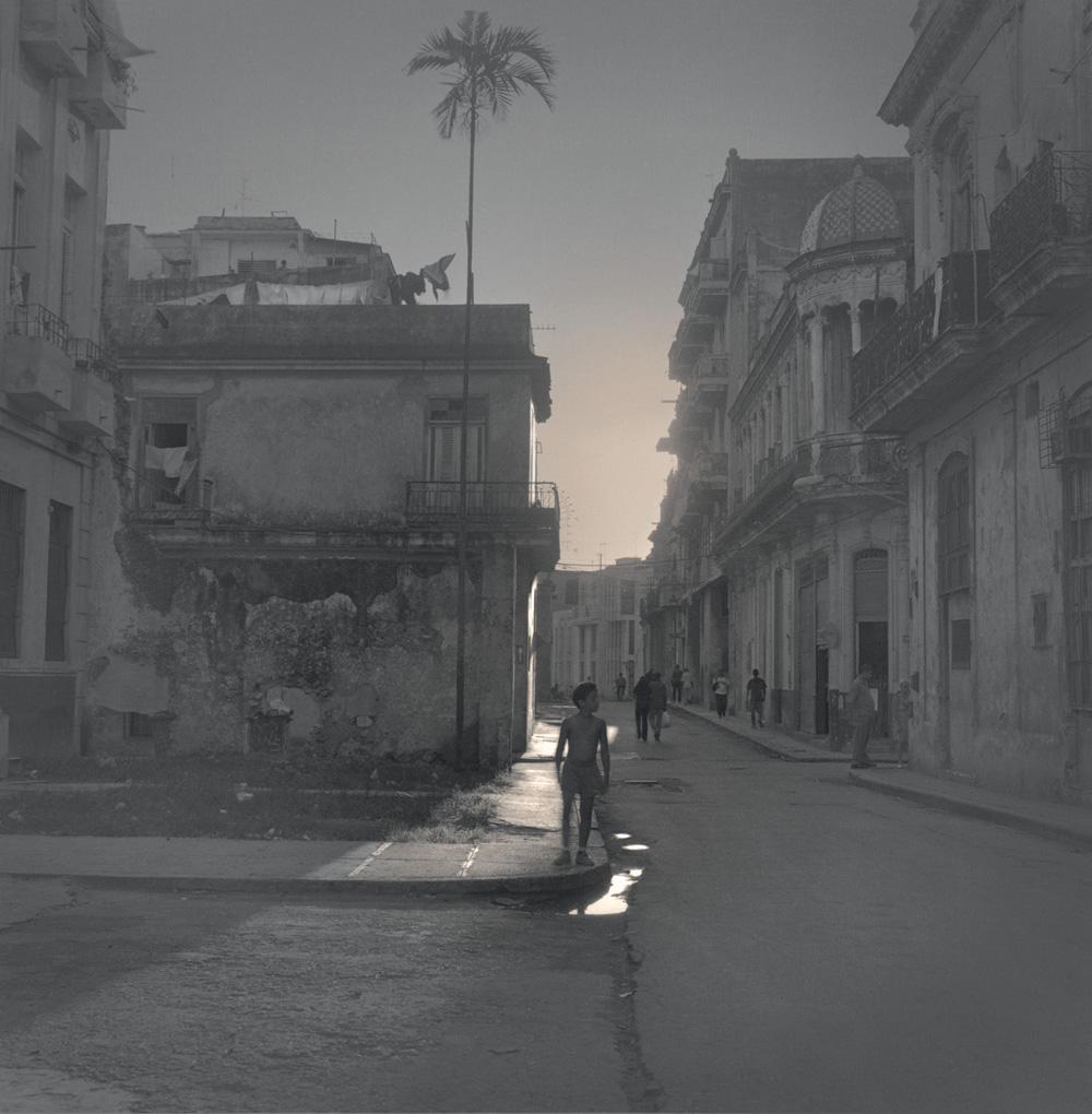 Old Havana. Palm tree, 2003