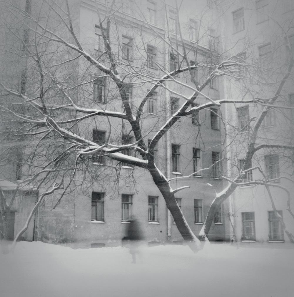 Tree in snow, 1997