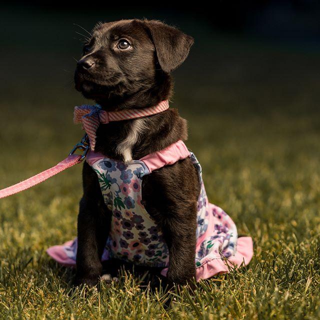 Penny penny penny! #puppy