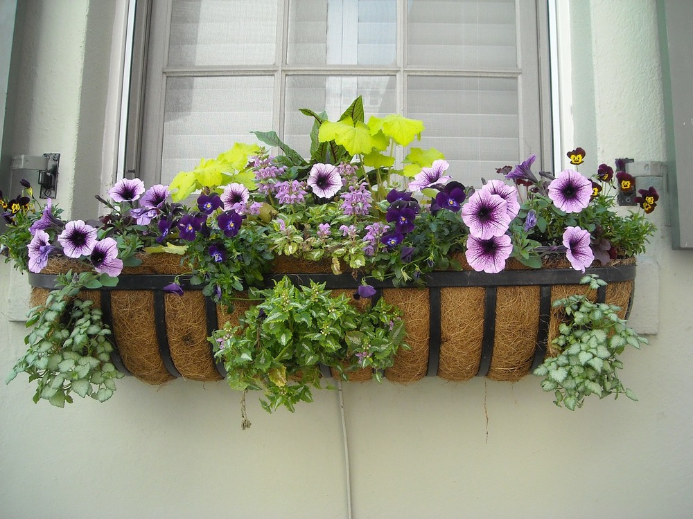 window-box-891985_1280.jpg