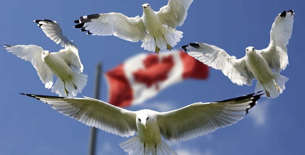 gulls-540791_1280-e1466794711816.jpg