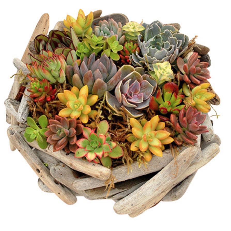 Driftwood Succulent Basket