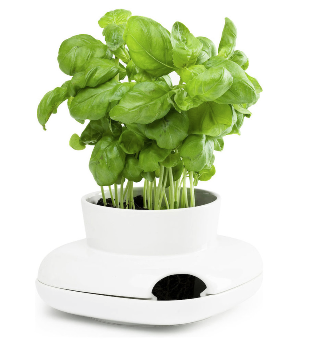 Herb Pot, Small