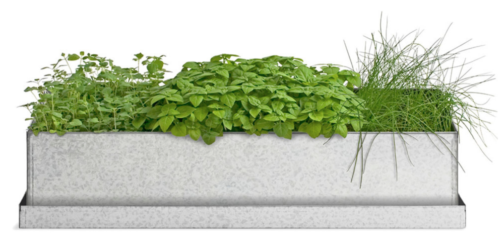 Windowsill Grow Box, Culinary Herbs