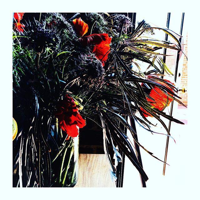 Poppies.#poppies #notinkansas