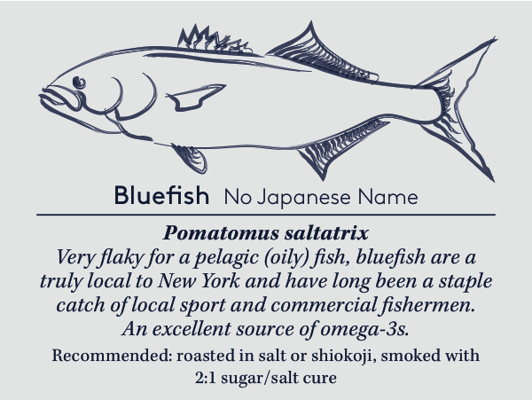 bluefishcard copy (4).jpg
