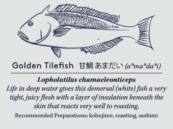 goldentilefishcard copy (2).jpg