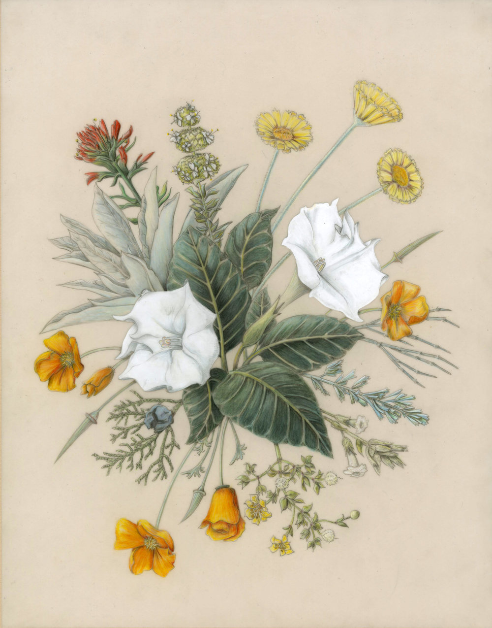 - Southern California Native Plants