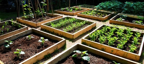 Photo courtesy of Veggiegardener.com