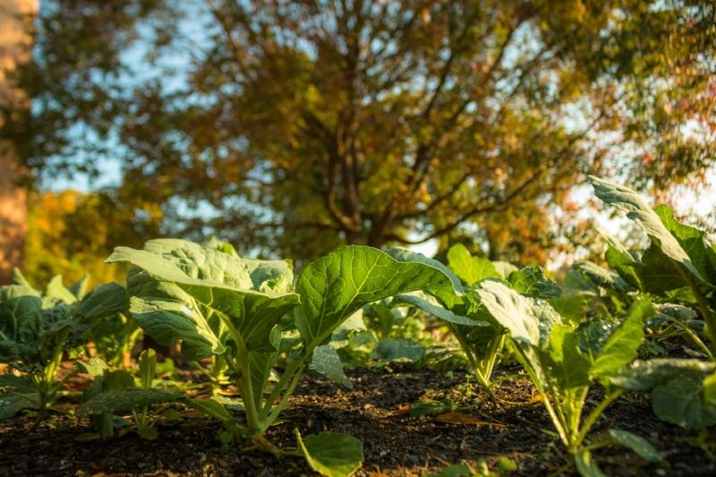 Photo courtesy of  walker-visual.com