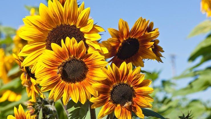 Photo courtesy of  rodalesorganiclife.com