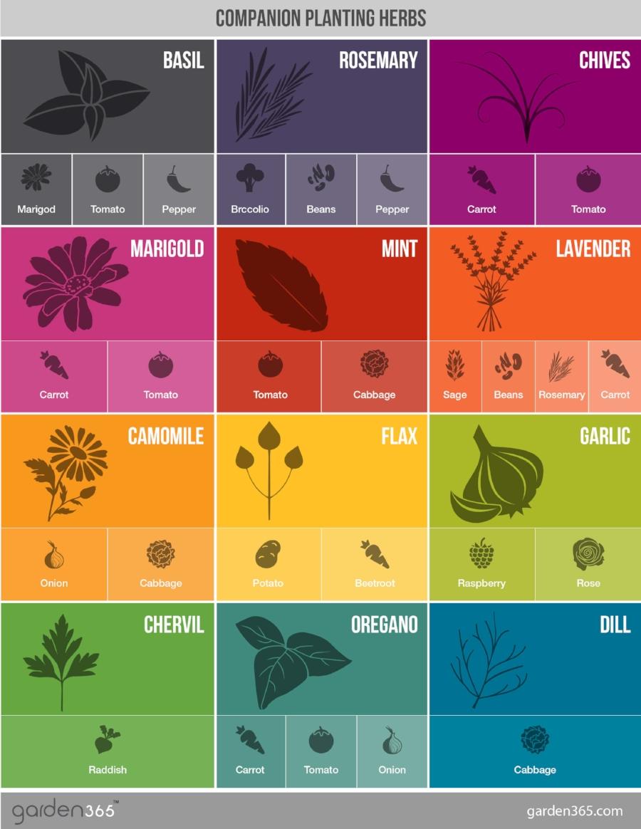 Charts courtesy of  Garden 365