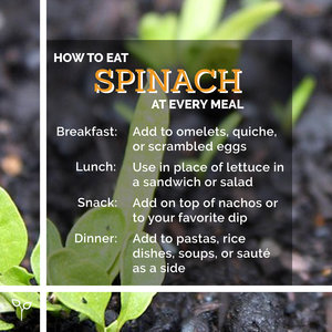 Pop Up Produce Food Facts Spinach