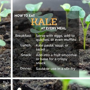 Pop Up Produce Food Facts Kale