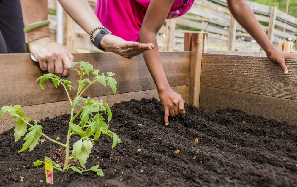 Pop Up Produce - Bruns Planting with PBS (22 of 31).jpg