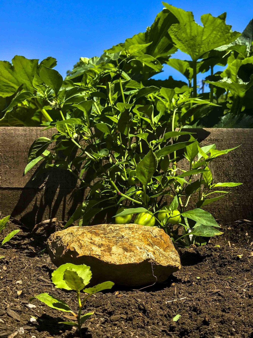 Pop Up Produce- Progress Bruns-7.jpg