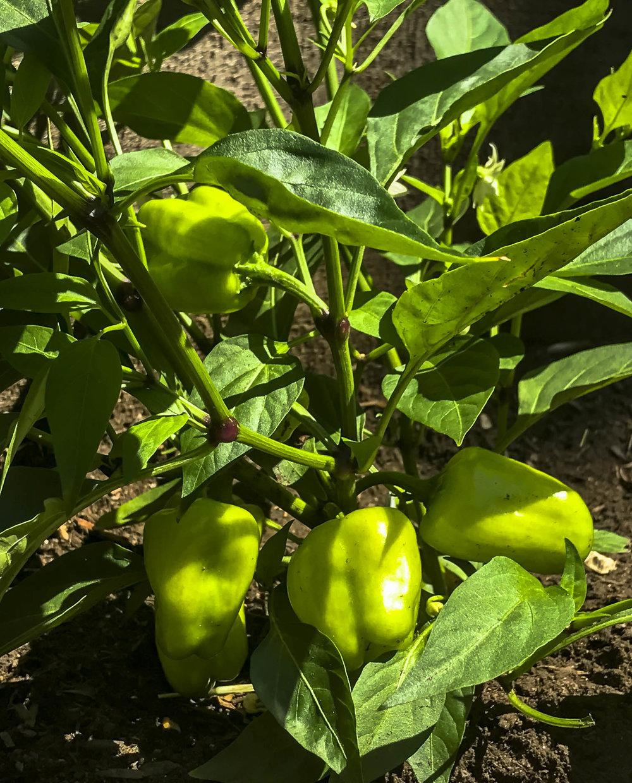 Pop Up Produce- Progress Bruns-6.jpg