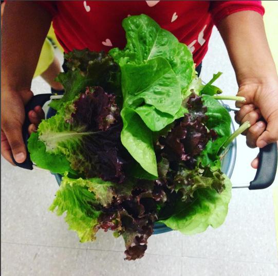 Salad Making class.jpg