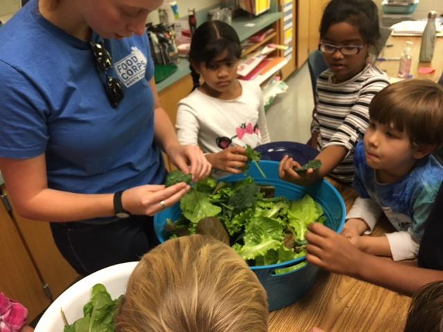 Preparing lettuce for salad bar.JPG