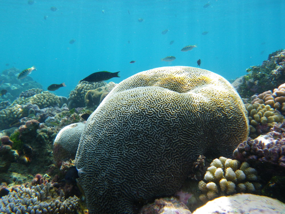 Coral   Photo by    Naomi    via  Flickr    Used in its original form on our  the   Our Work page    CC by 2.0  Usage License