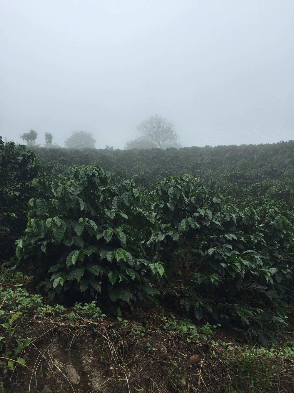 Coffee farm in Colombia