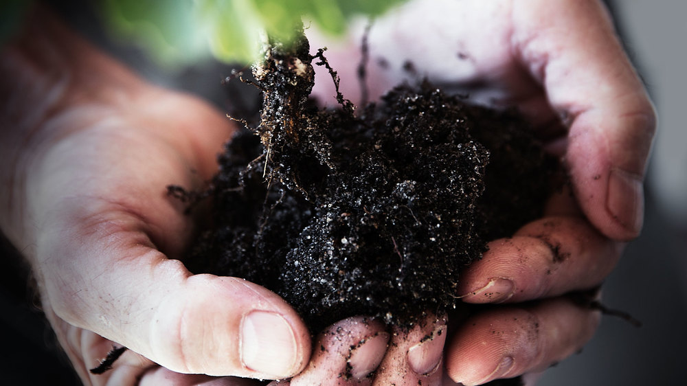 A TOAST #soil #dirt #hands #palms #seedling #roots #gift #present #SophiaTerraZiva